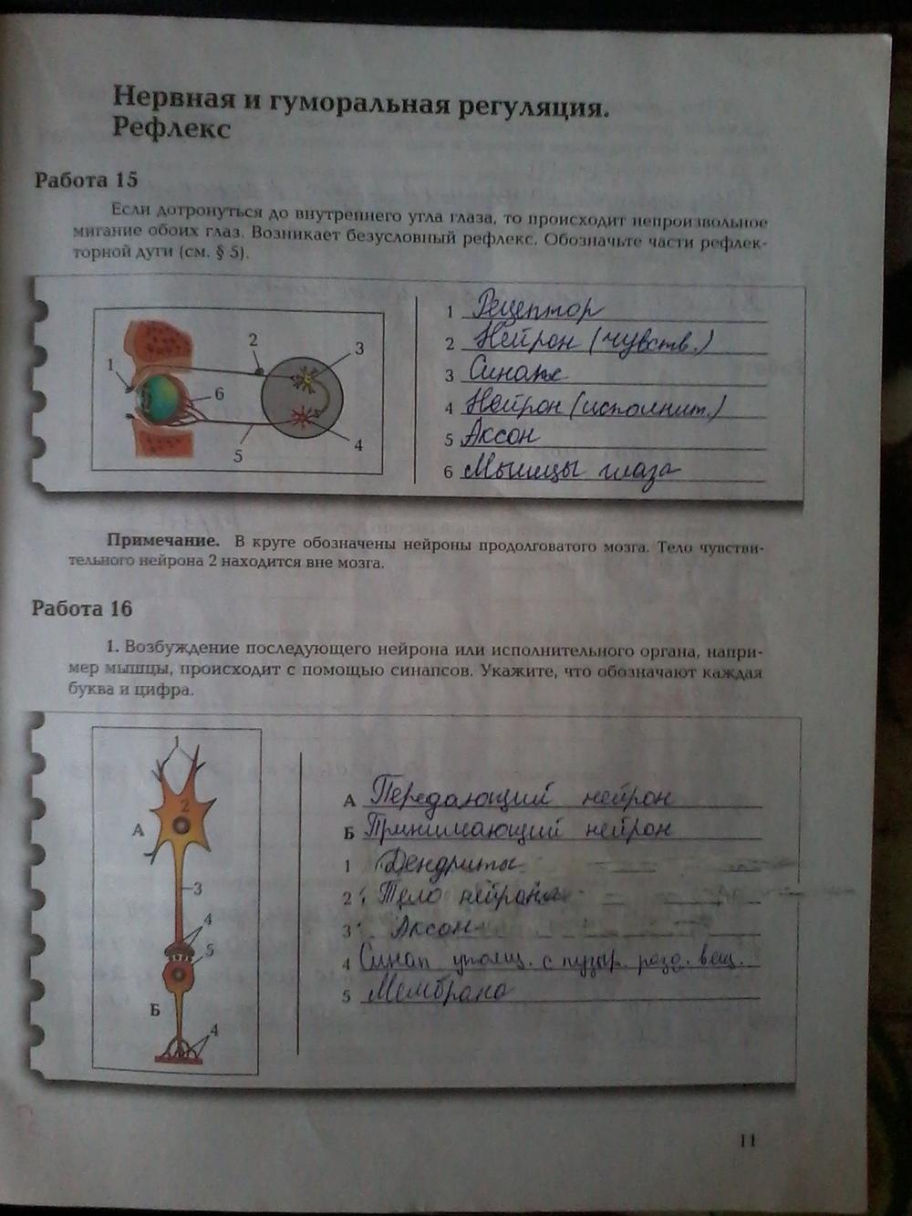 Рабочая тетрадь 1 по биологии 8 класс ответы маш драгомилов