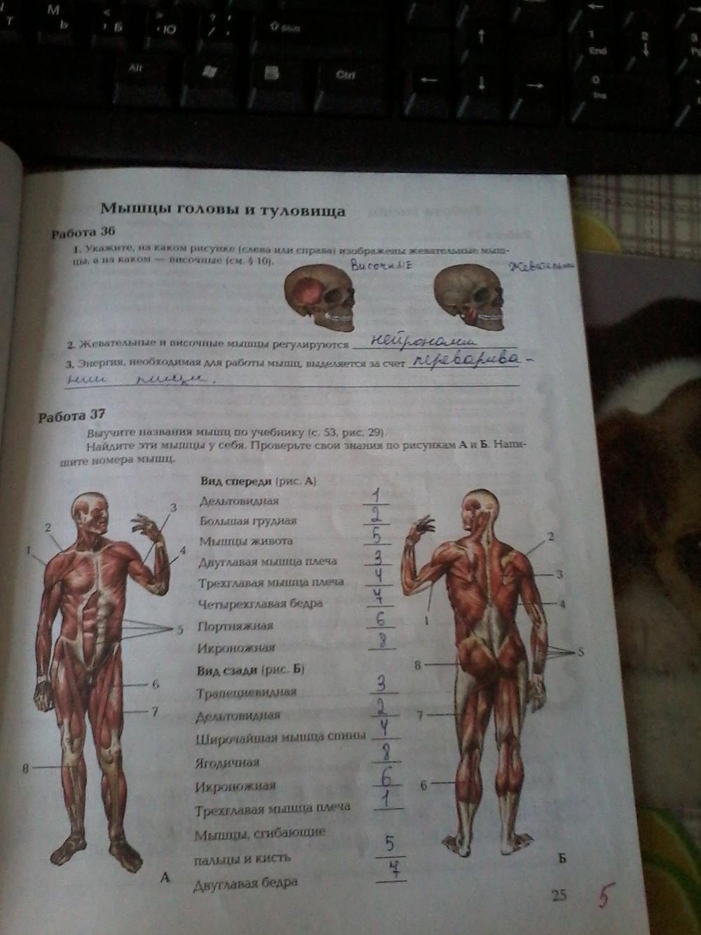 Гдз по биологии 8класс авторы драгомиров и маш